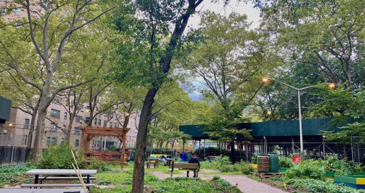 Despite funding barriers and NYCHA burdens, a garden grows in Port Morris